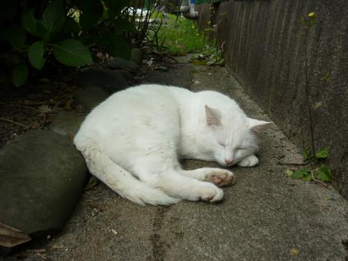 暑いときのお昼寝場所のひとつ・・・