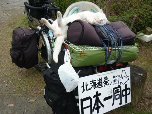 日本一周を夢見る!?『ねこ』