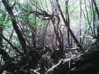 白谷雲水峡&太鼓岩